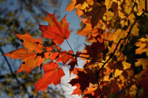 Fall Foliage Green Bay