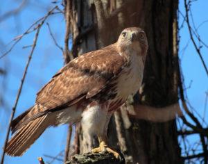Birding in Green Bay
