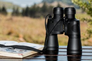 Best Places for Birding in Green Bay in 2019