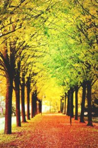 green-bay-fall-magic-walkway
