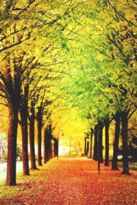 green-bay-fall-magic-walkway