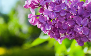 Spring Blooms at the Green Bay Botanical Garden